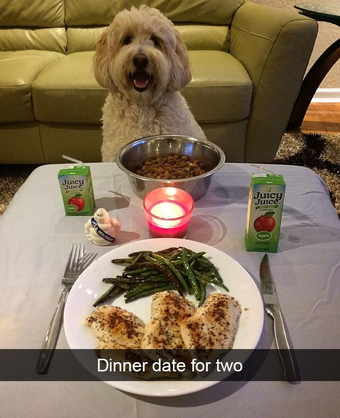 Dog - Juicy Juicy Juice Apple Dinner date for two