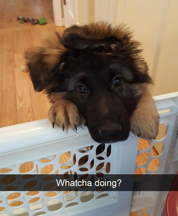 Dog - Whatcha doing?