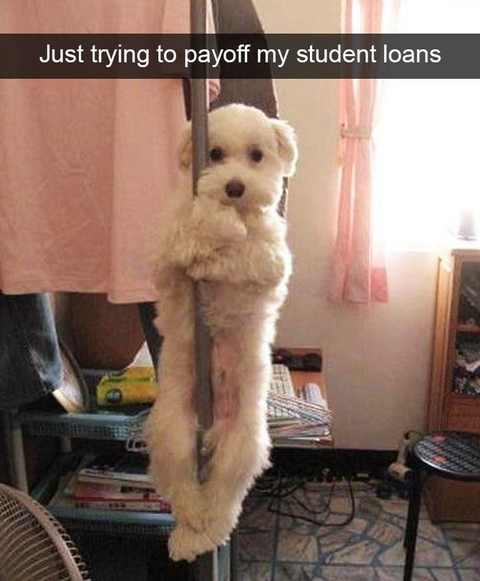 Dog - Just trying to payoff my student loans
