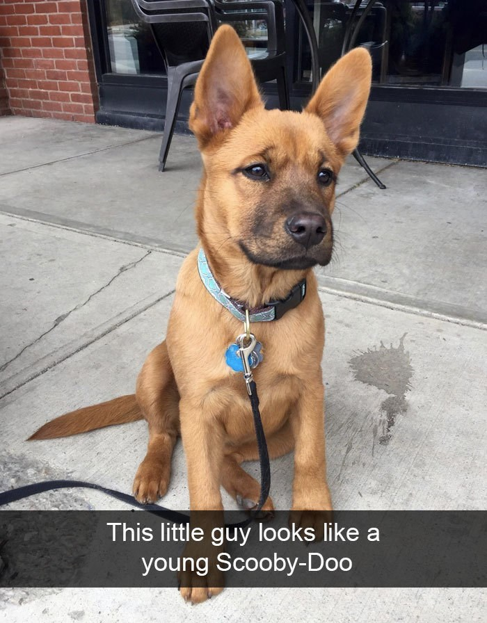 Dog - This little guy looks like a young Scooby-Doo