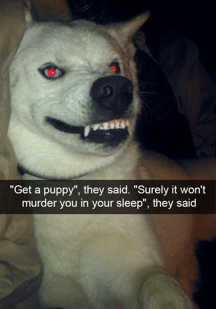 """Mammal - """"Get a puppy"""", they said. """"Surely it won't murder you in your sleep"""", they said"""