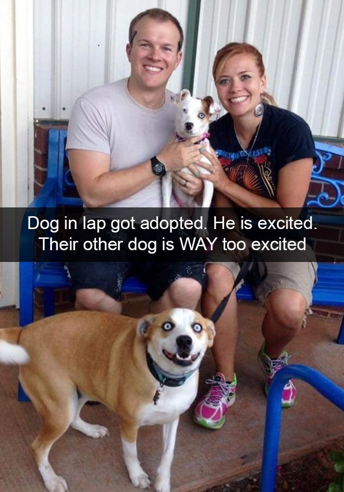 Dog - Dog in lap got adopted. He is excited. Their other dog is WAY too excited