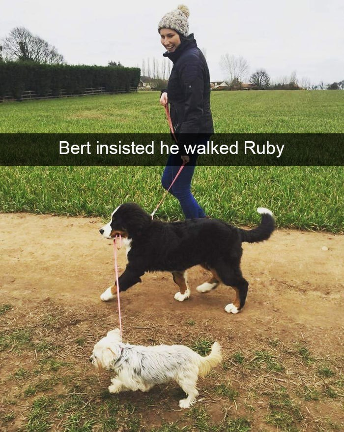 Dog - Bert insisted he walked Ruby