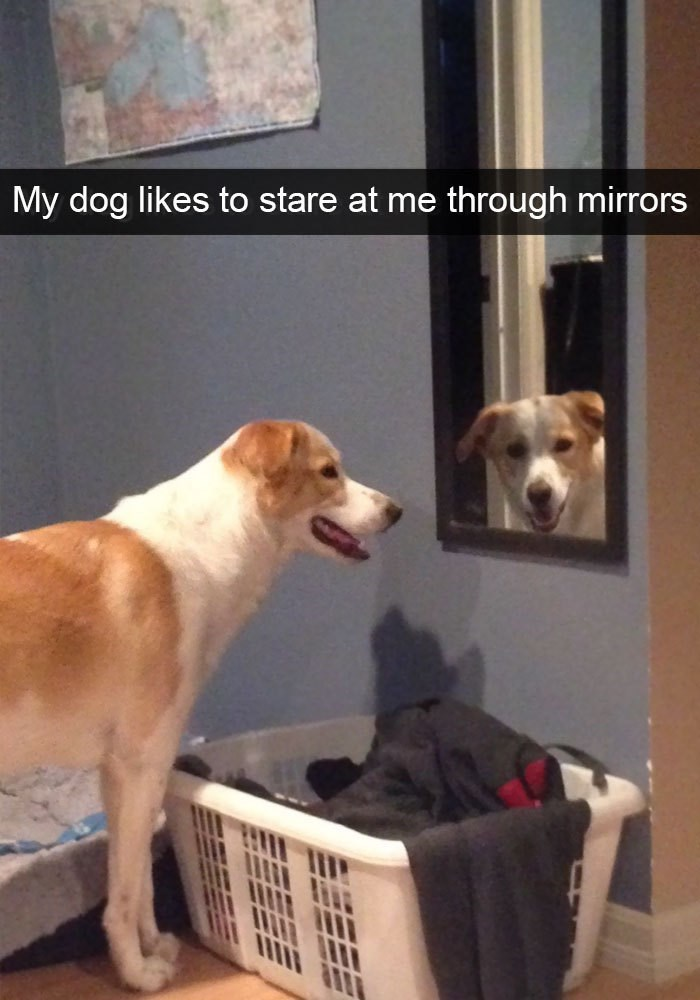 Dog - My dog likes to stare at me through mirrors