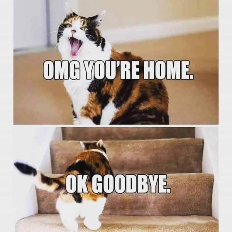 Facial expression - OMG YOU'RE HOME. ОK GOODBYE.