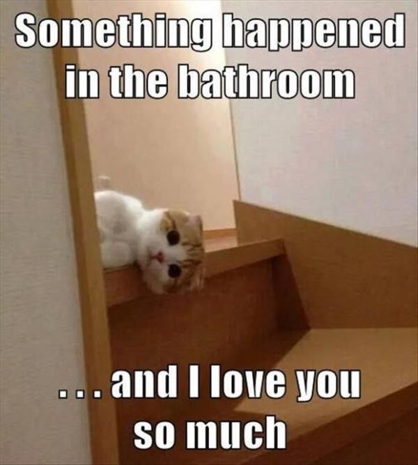 Photo caption - Something happened in the bathroom and I love you so much