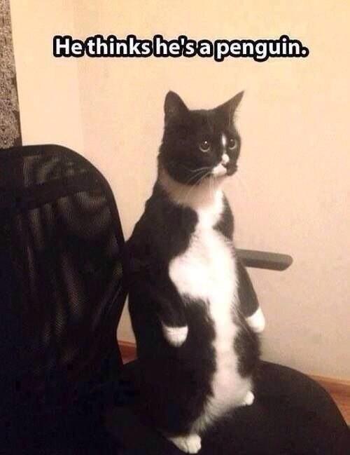 Cat - Hethinkshe'sa penguin.