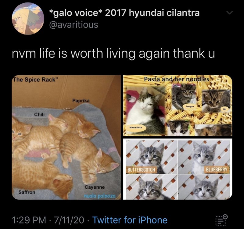 """Organism - *galo voice* 2017 hyundai cilantra @avaritious nym life is worth living again thank u The Spice Rack"""" Pasta and her noodles Paprika Lasagna Ziti Chili Mama Pasta BUTTERSCOTCH BLUEBERRY Cayenne Saffron nuala palooza 1:29 PM · 7/11/20 · Twitter for iPhone"""