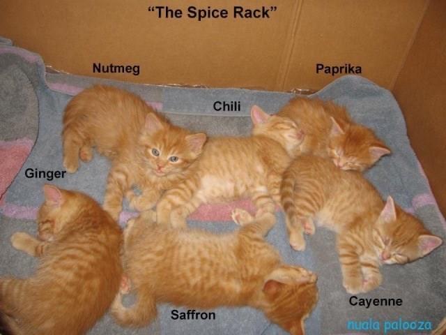 "Cat - ""The Spice Rack"" Nutmeg Paprika Chili Ginger Cayenne Saffron nuala palooza"