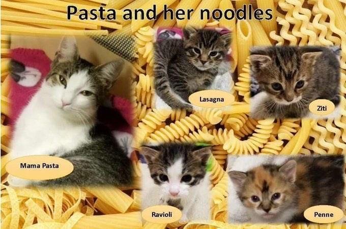 Cat - Pasta and her noodles Lasagna Ziti Mama Pasta Ravioli Penne