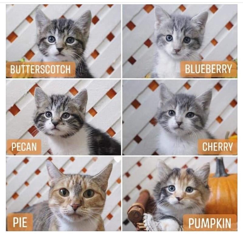 Cat - BUTTERSCOTCH BLUEBERRY PECAN CHERRY PIE PUMPKIN