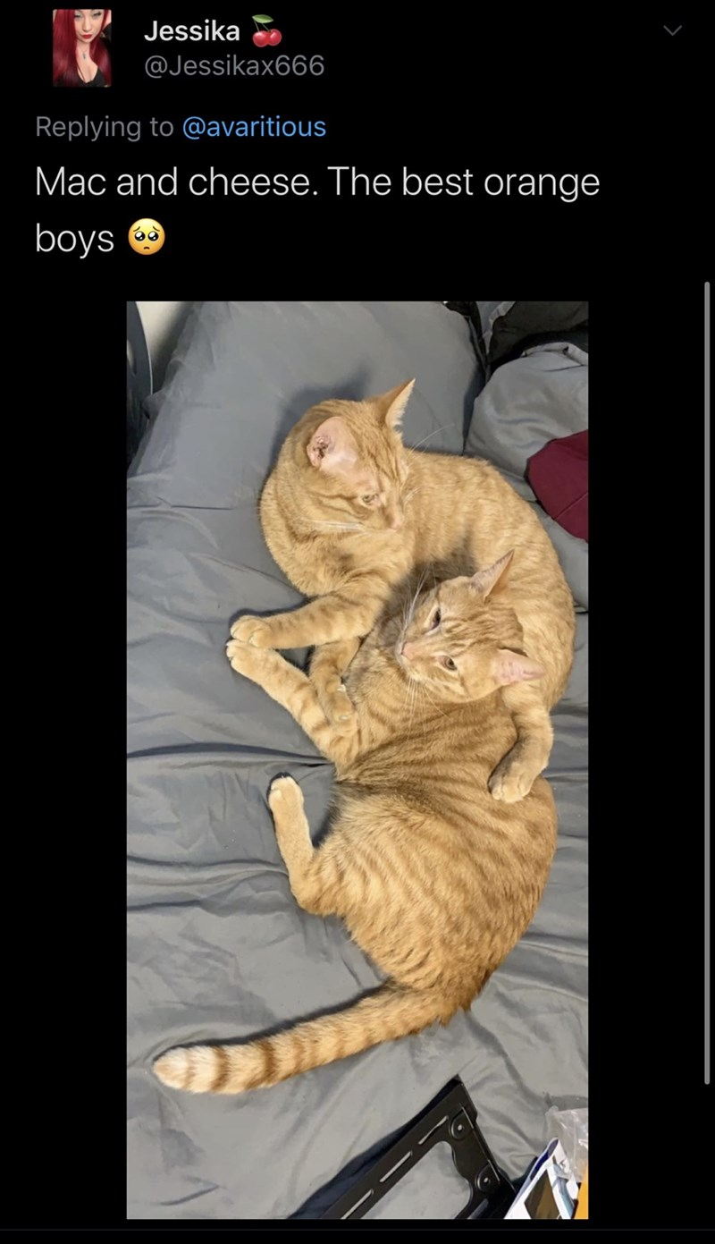 Cat - Jessika @Jessikax666 Replying to @avaritious Mac and cheese. The best orange boys