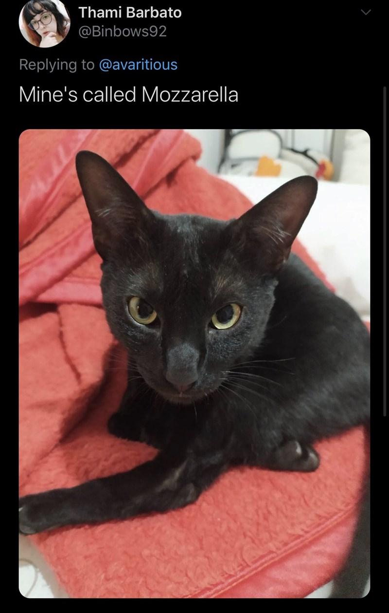 Cat - Thami Barbato @Binbows92 Replying to @avaritious Mine's called Mozzarella