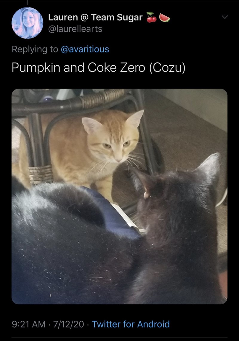 Cat - Lauren @ Team Sugar @laurellearts Replying to @avaritious Pumpkin and Coke Zero (Cozu) 9:21 AM · 7/12/20 · Twitter for Android