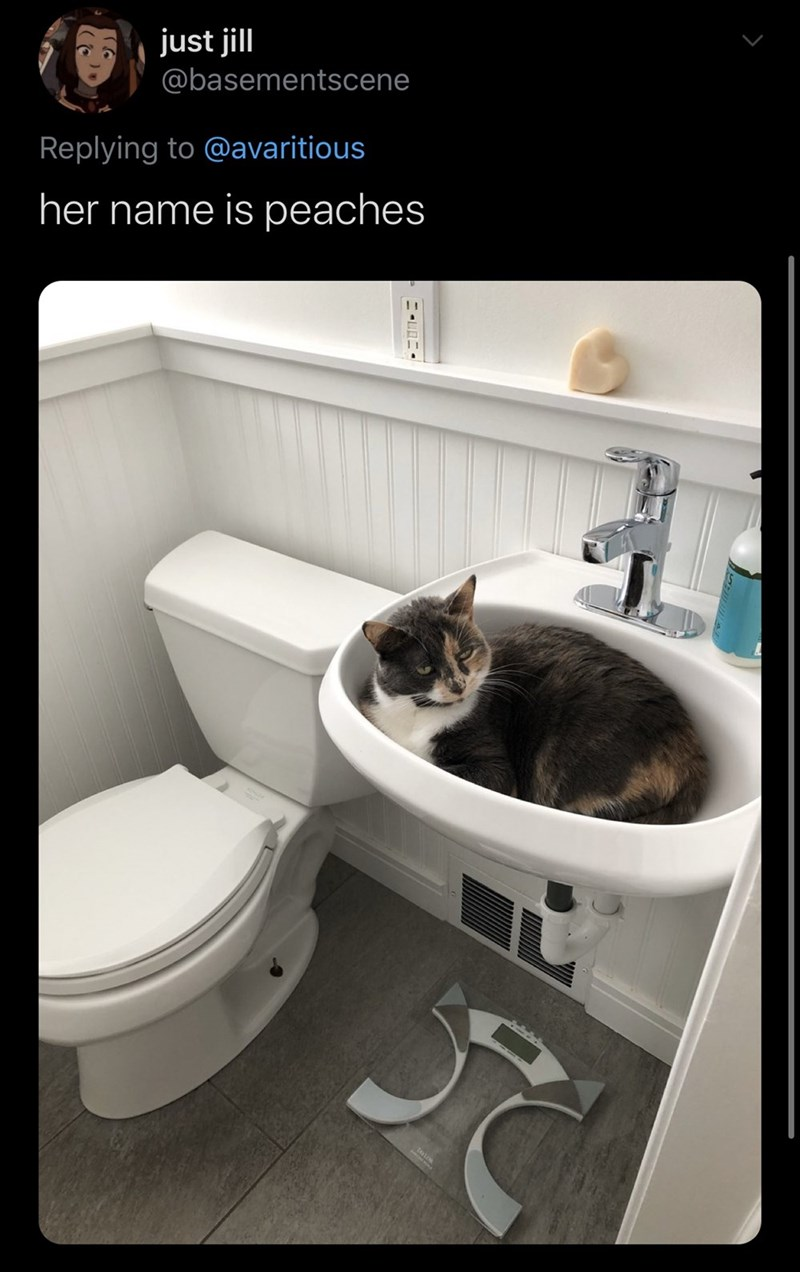 Bathroom - just jill @basementscene Replying to @avaritious her name is peaches
