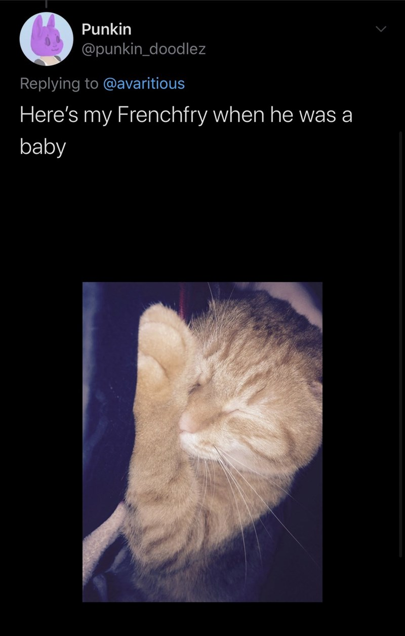 Medical imaging - Punkin @punkin_doodlez Replying to @avaritious Here's my Frenchfry when he was a baby