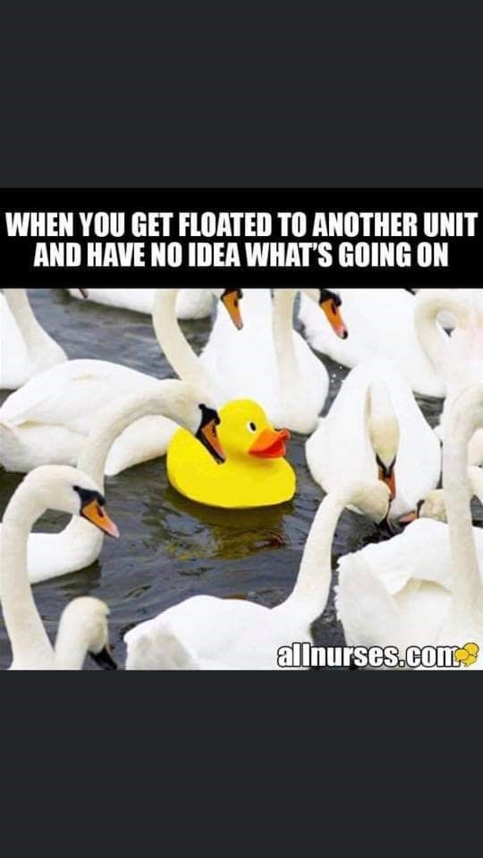 Bird - WHEN YOU GET FLOATED TO ANOTHER UNIT AND HAVE NO IDEA WHAT'S GOING ON allnurses.com