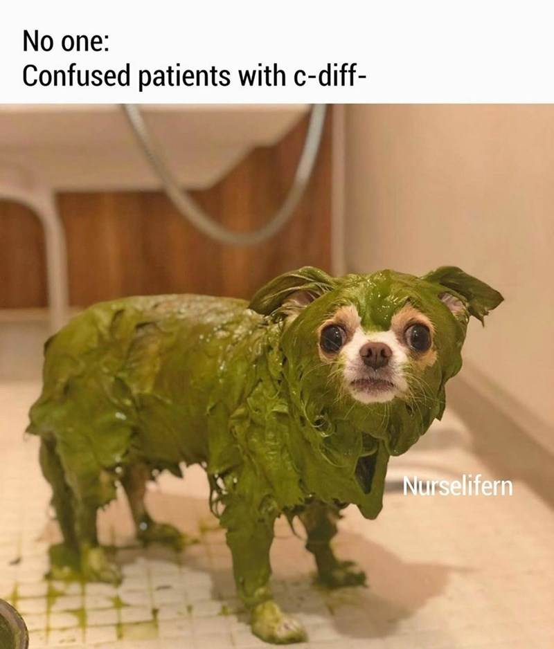 Dog - No one: Confused patients with c-diff- Nurselifern