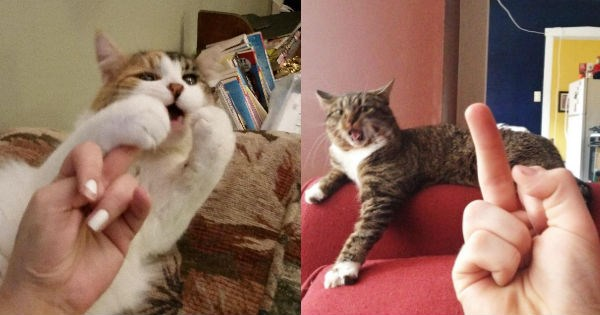 middle finger Reddit Cats funny - 951813