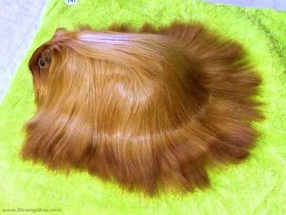 Hair - www.StrangeZoo.com