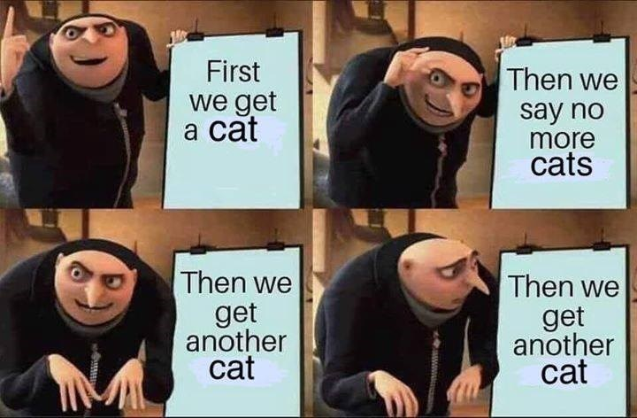 Gru's plan Despicable Me we get a cat Then we get another cat Then we say no more cats Then we get another cat