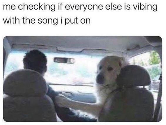 Dog - me checking if everyone else is vibing with the song i put on