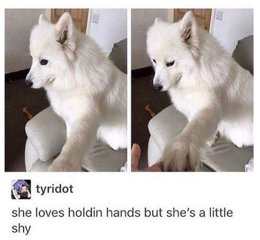 Mammal - tyridot she loves holdin hands but she's a little shy