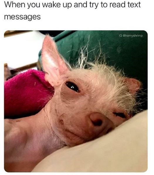 Vertebrate - When you wake up and try to read text messages IG Ghormyshrimp