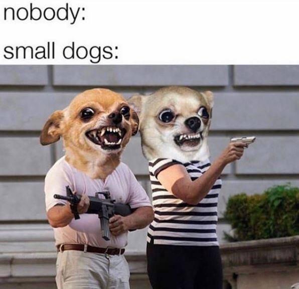 Dog - nobody: small dogs: