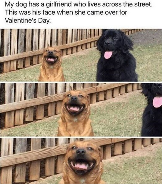 Dog - My dog has a girlfriend who lives across the street. This was his face when she came over for Valentine's Day.