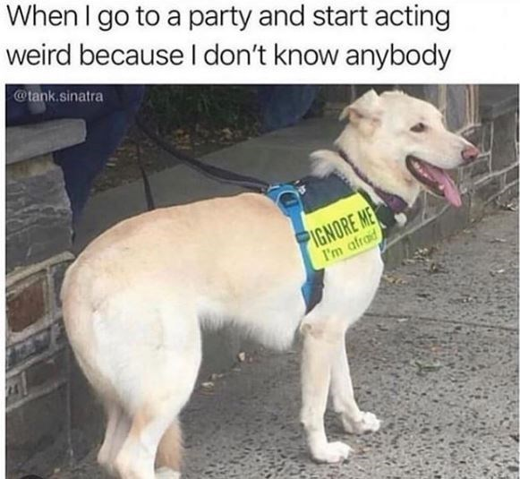 Dog - When I go to a party and start acting weird because I don't know anybody @tank.sinatra PIGNORE ME I'm afraid