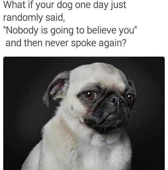 """Pug - What if your dog one day just randomly said, """"Nobody is going to believe you"""" and then never spoke again?"""