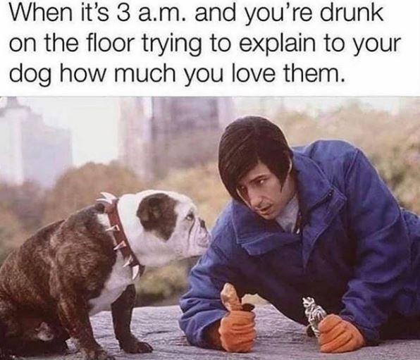 Canidae - When it's 3 a.m. and you're drunk on the floor trying to explain to your dog how much you love them.