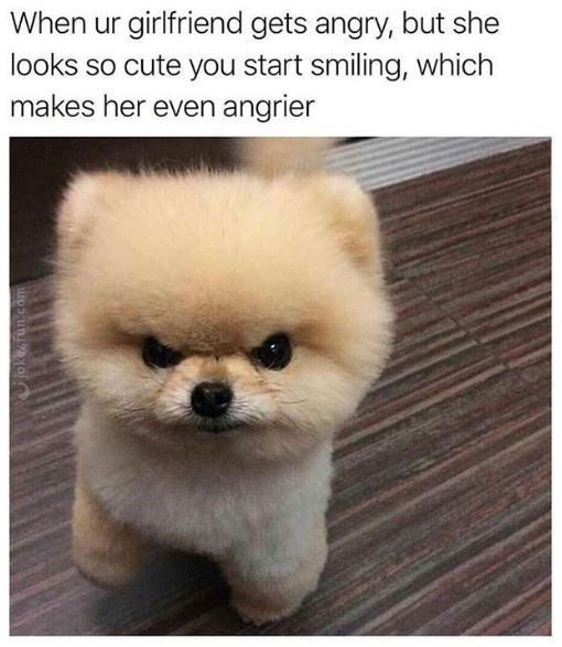 Dog - When ur girlfriend gets angry, but she looks so cute you start smiling, which makes her even angrier Gjokez fun.com