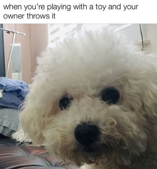 Dog - Dog - when you're playing with a toy and your owner throws it