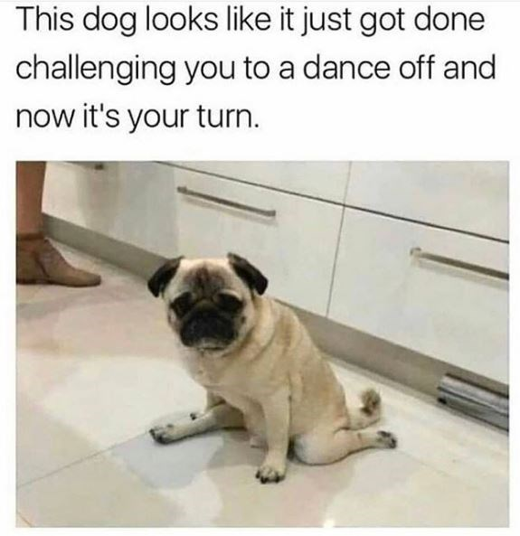 Dog - Pug - This dog looks like it just got done challenging you to a dance off and now it's your turn.