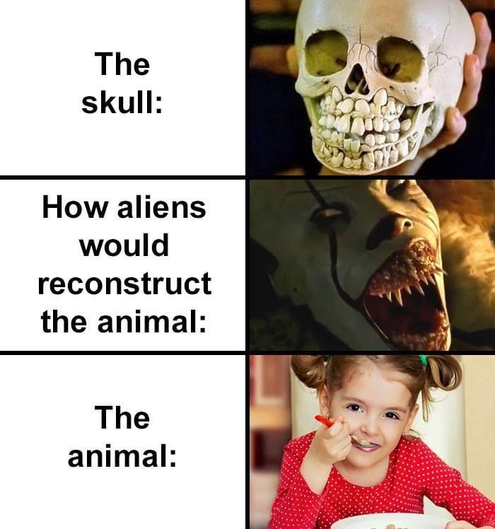 Face - The skull: How aliens would reconstruct the animal: The animal: