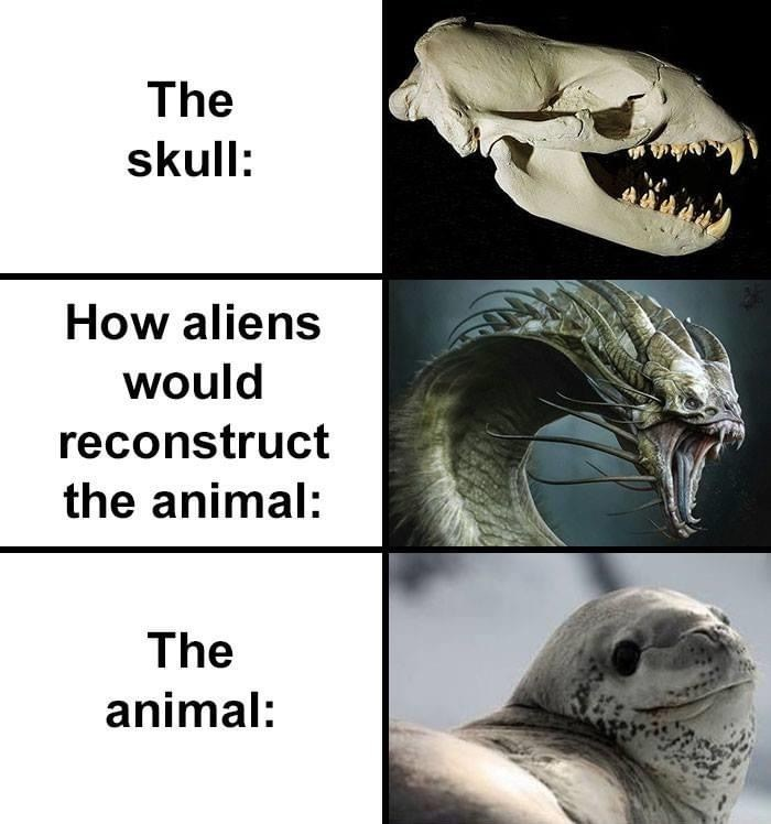 Mouth - The skull: How aliens would reconstruct the animal: The animal: