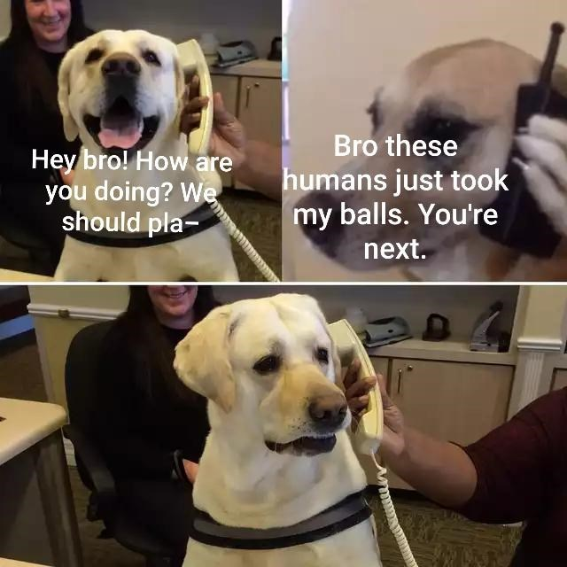 Dog - Hey bro! How are you doing? We should pla- Bro these humans just took my balls. You're next.