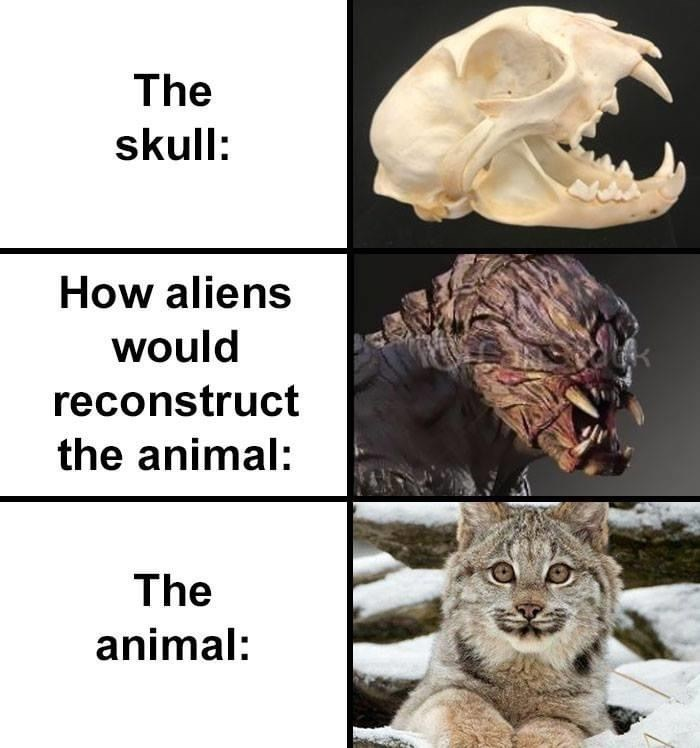 Cat - The skull: How aliens would reconstruct the animal: The animal: