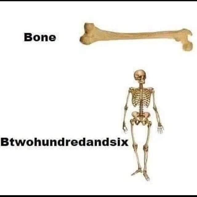 Joint - Bone Btwohundredandsix