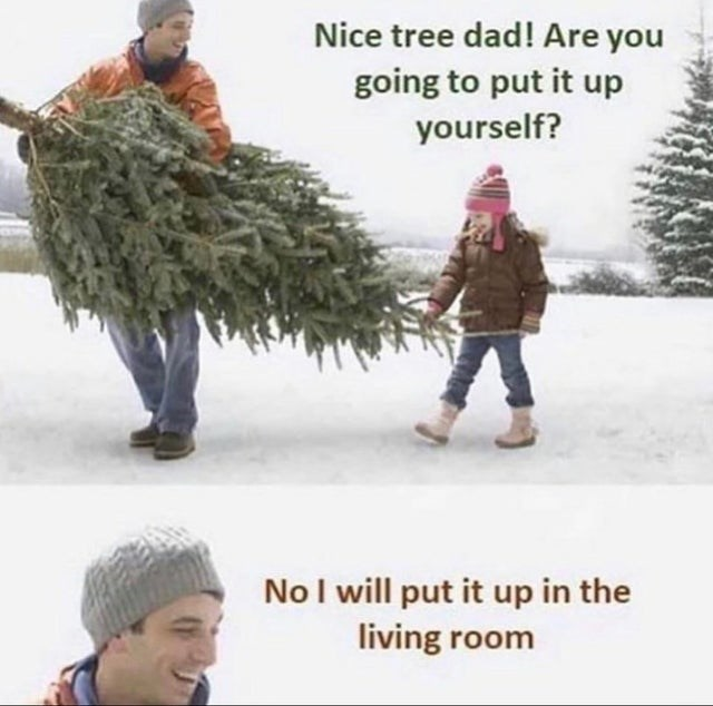 Snow - Nice tree dad! Are you going to put it up yourself? NoI will put it up in the living room