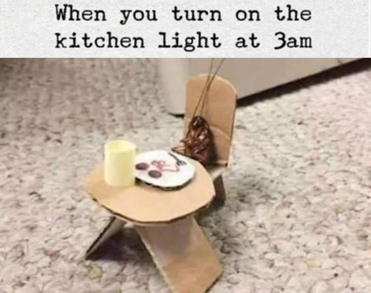 When you turn on the kitchen light at 3am cockroach sitting at a miniature cardboard table and chair