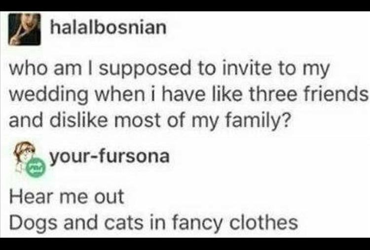 halalbosnian who am I supposed to invite to my wedding when i have like three friends and dislike most of my family? your-fursona Hear me out Dogs and cats in fancy clothes