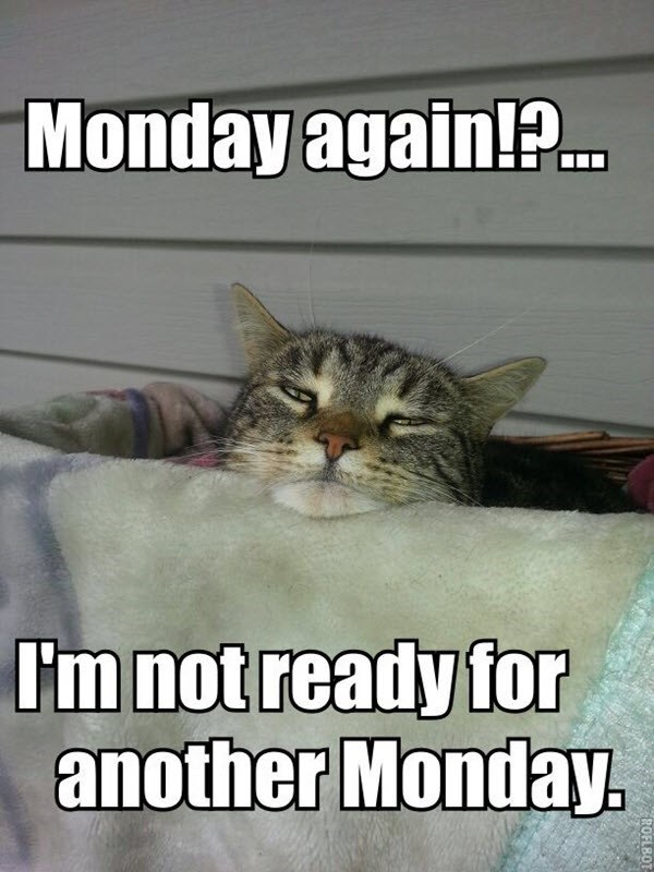 Cat - Monday again!?. I'm not ready for another Monday. ROFLBO