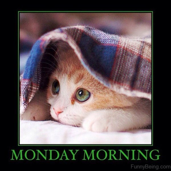 Cat - MONDAY MORNING FunnyBeing.com