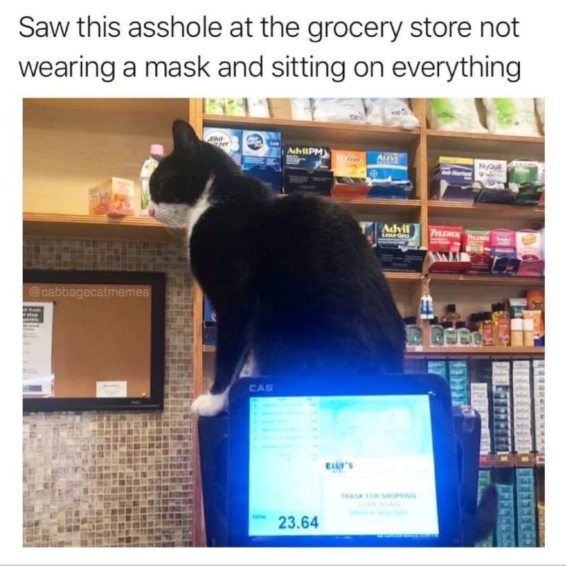 Cat - Saw this asshole at the grocery store not wearing a mask and sitting on everything Alka AdvilPM) ALLVE Nyouil Advil TINO @cabbagecatmemes CAS EL'S THANK FOR SHOPPING 23.64