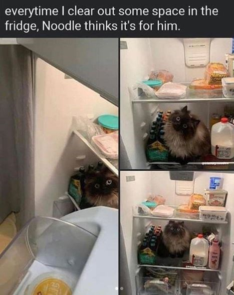 Refrigerator - everytime I clear out some space in the fridge, Noodle thinks it's for him.