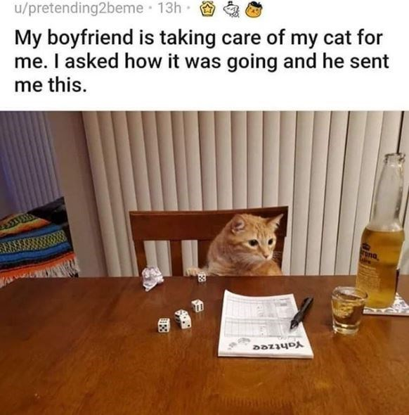 Cat - u/pretending2beme 13h My boyfriend is taking care of my cat for me. I asked how it was going and he sent me this. rona Yahtzee