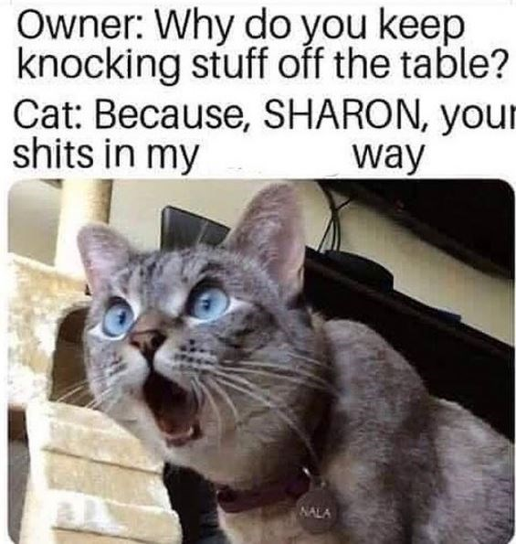Cat - Owner: Why do you keep knocking stuff off the table? Cat: Because, SHARON, your shits in my way NALA